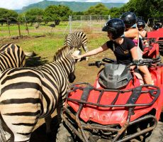 Quad biking with Zebra in Casela